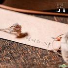 Jungheum Band EP Album - Record of Love