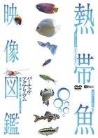 SynForest DVD - Nettaigyo Eizo Zukan Virtual Aquarium : Eizo to Oto de Tanoshimu Utsukushiki Nettaigyo no Sekai (DVD) (Japan Version)
