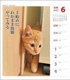 Cat Senryu 2022 Weekly Calendar (Japan Version)